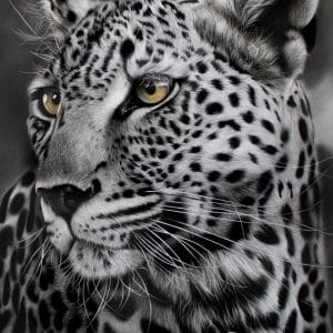 Leopard of Timbavati 2