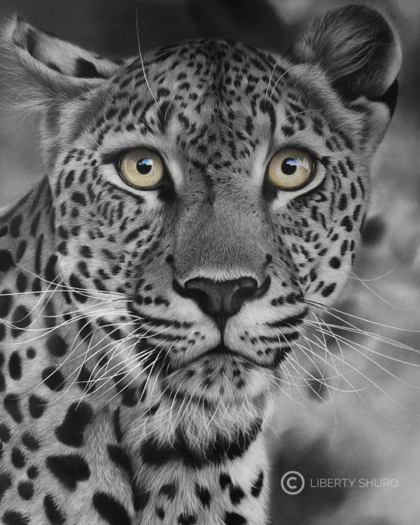 Leopard of Timbavati