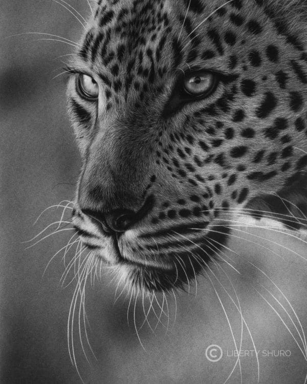 African Leopard Stare